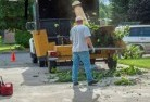 Anula Tree cutting services 13