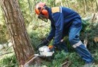 Anula Tree cutting services 21